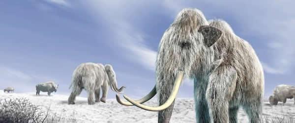 最新研究认为人类祖先在狗的帮助下捕杀猛犸象