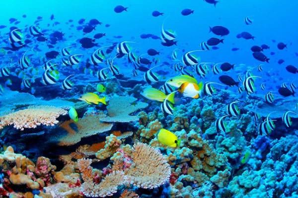 澳大堡礁获暂缓列入濒危世界遗产名录
