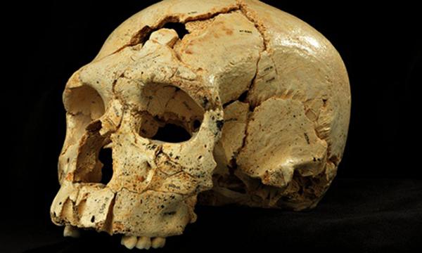 西班牙发现最早的尼安德特人特征头骨化石 距今43万年