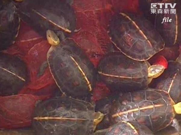 """保护食蛇龟 触口建置""""台湾龟类保种与研究中心"""""""