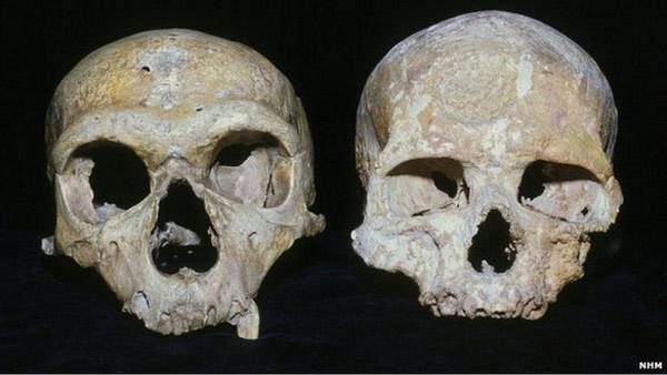 台大教授利用铀钍定年法测出尼安德塔人的生存年代,登上国际期刊《Science》。