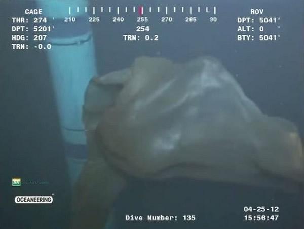 """墨西哥湾深海神秘海洋生物证实为""""胎盘水母"""""""