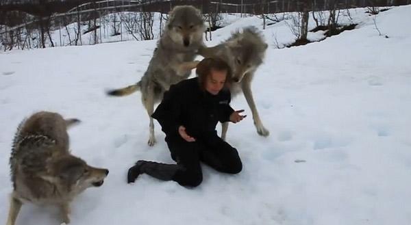 狼抱着女孩霸气图片_你抱着的是只狼
