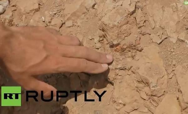 俄罗斯西伯利亚挖出2具完整的具有鬃毛状物的鹦鹉嘴龙化石