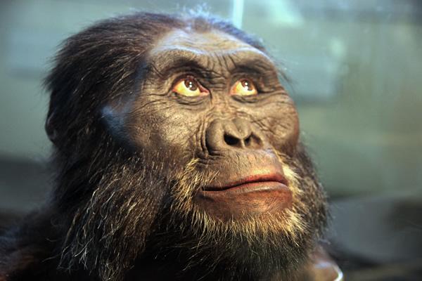 暴力促使古人类出现关键的进化