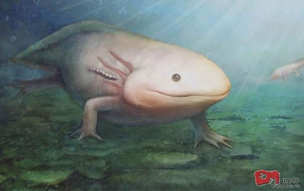 """奇异虫很可能寄生于蝾螈鳃后部的皮肤或其它隐蔽部位,吸食血液或体液,堪称为侏罗纪的水中""""吸血鬼""""。"""