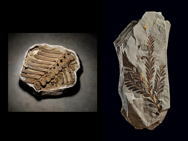 PHOTOGRAPHS BY CORY RICHARDS. NATURAL HISTORY MUSEUM OF UTAH (LEFT); DENVER MUSE
