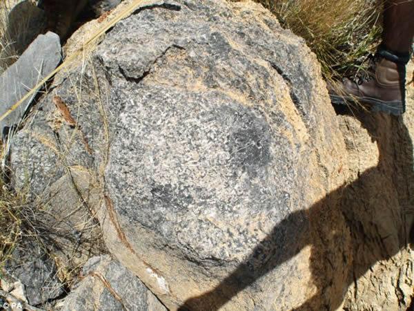 非洲国家纳米比亚南部沙漠边缘地带发现最古老的动物礁石