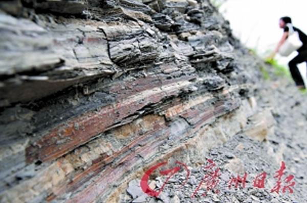 """珠三角第一块恐龙骨化石在佛山""""现身"""""""