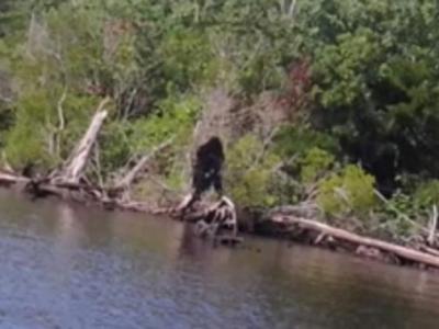 """美国弗吉尼亚州男子钓鱼时拍摄到""""大脚怪"""""""
