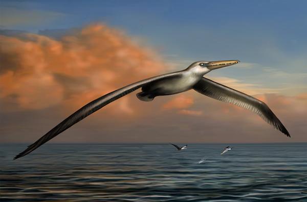美国南卡罗来纳州发掘的一个史前海鸟化石可能是地球历史上曾经存在的最大鸟类