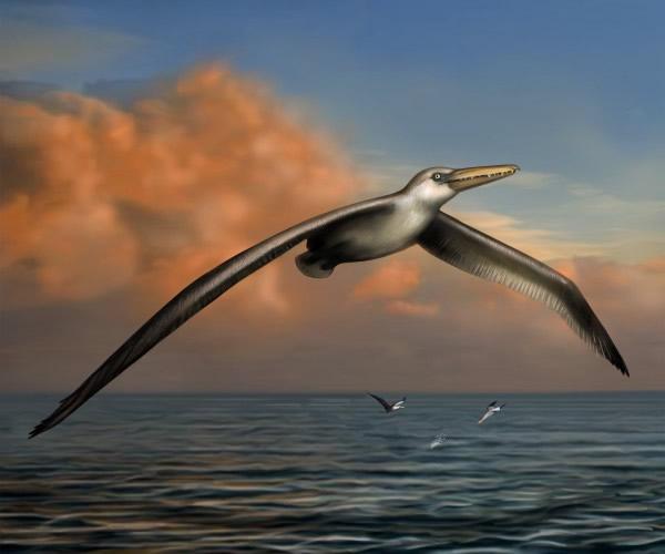 桑氏伪齿鸟(Pelagornis sandersi)复原图