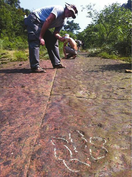 四川泸州古蔺发现中国最长肉食恐龙足迹化石