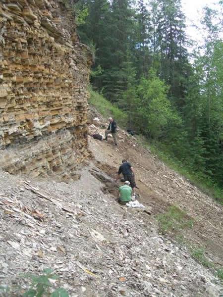 """这幅图片描绘了在不列颠哥伦比亚省漂流木峡谷省立公园里的""""北脸""""化石遗址中的那些含有化石的沉积物,在那里发现了灭绝的刺猬化石。"""