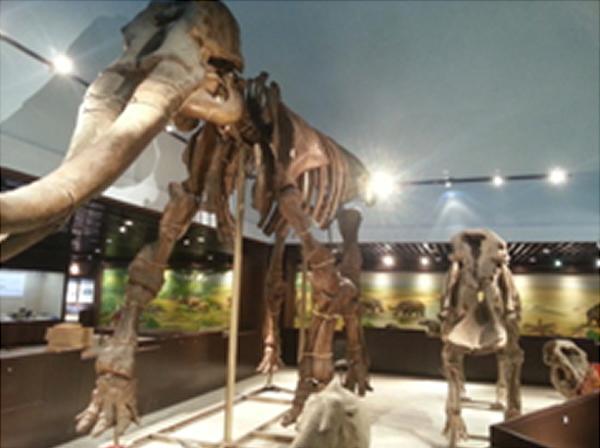 中国古动物馆定于2014年7月12日重新开馆