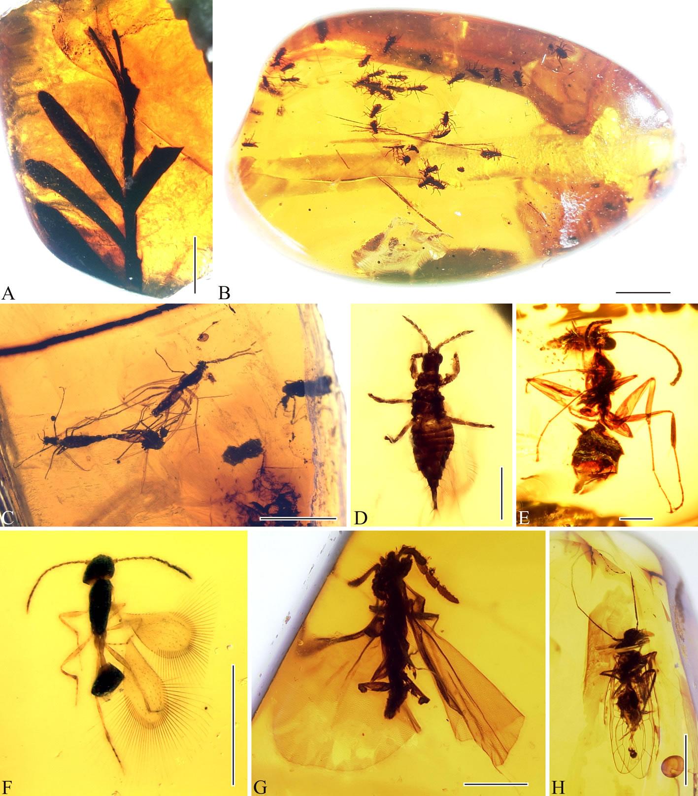抚顺琥珀中重要的植物和昆虫