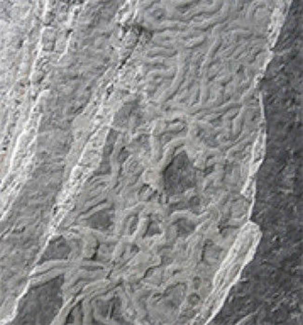 动物用于寻找短期食物补给的方法至少5000万年没有发生变化
