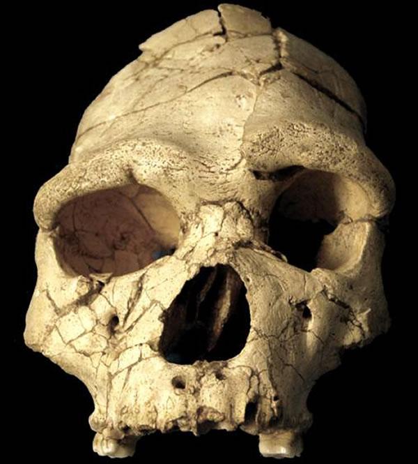 海德堡人是否存在成古人类学界最大争论
