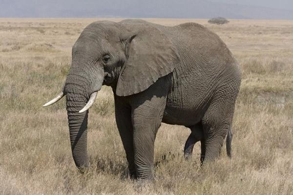 美国《科学》期刊发表研究报告:地球已步入第6次生物大灭绝