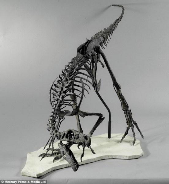 2.3米长嗜鸟龙化石将拍卖