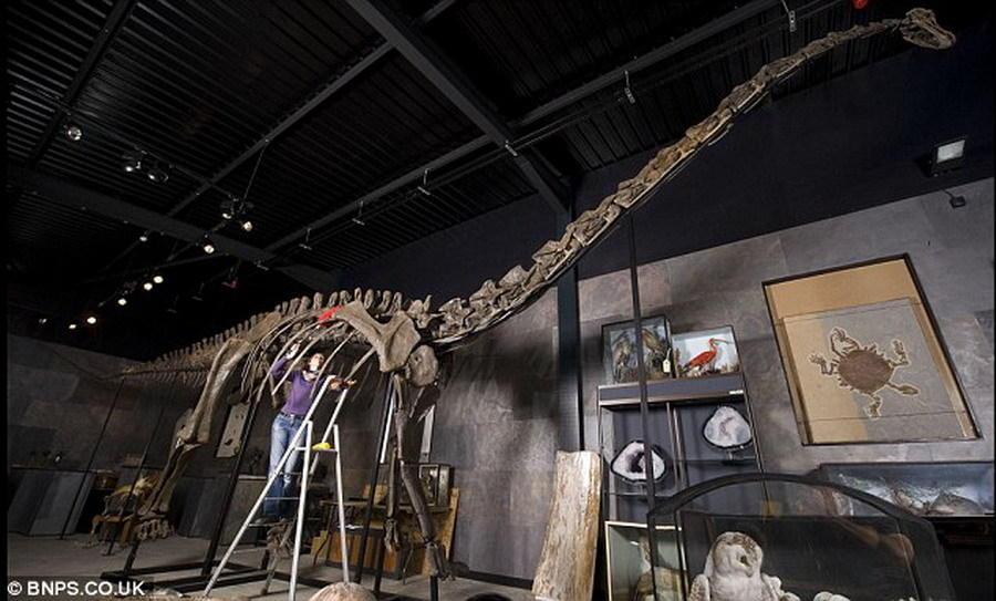 几个月前一具梁龙骨骼化石以50万英镑成功拍卖。