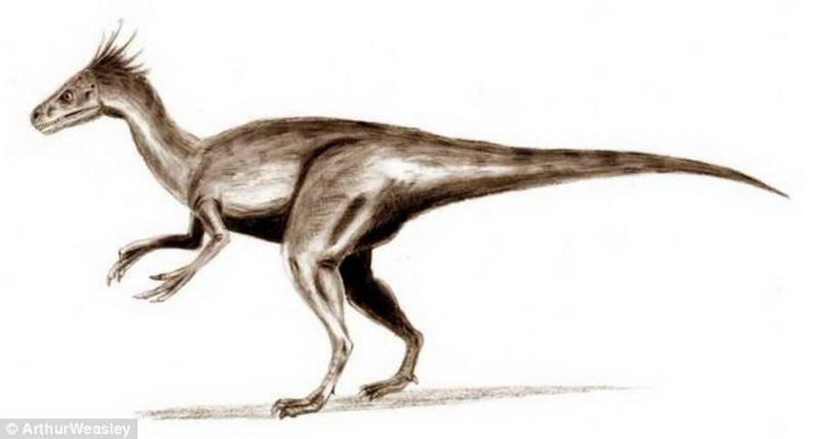 虽然嗜鸟龙身体很小,体重仅15公斤,却非常擅长于捕猎,它们的主要食物包括:小型哺乳动物、蜥蜴和鸟类。