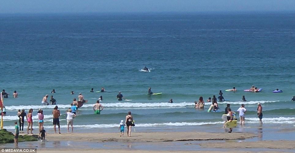 """英国康沃尔海滩3条海豚近距离表演""""翻腾跳跃"""" 泳客感动落泪"""