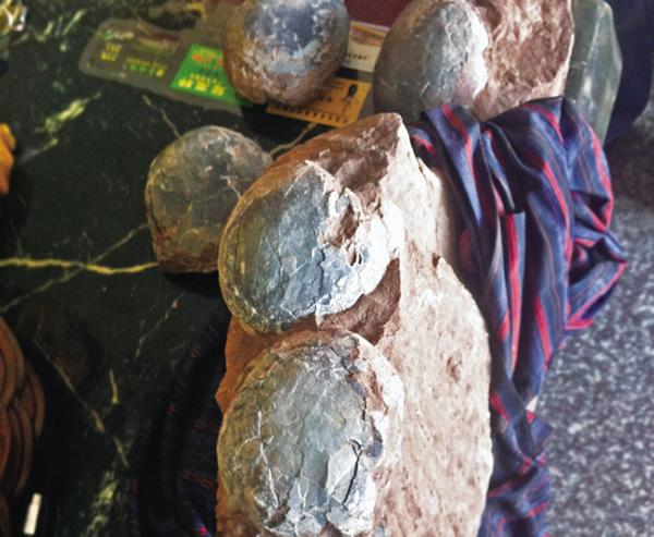 浙江金华街头兜售恐龙蛋化石