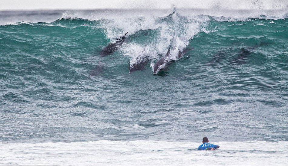 东开普省以其黄金冲浪和大量宽吻海豚群著称,能同时观看到他们,不失为一次幸运的享受。