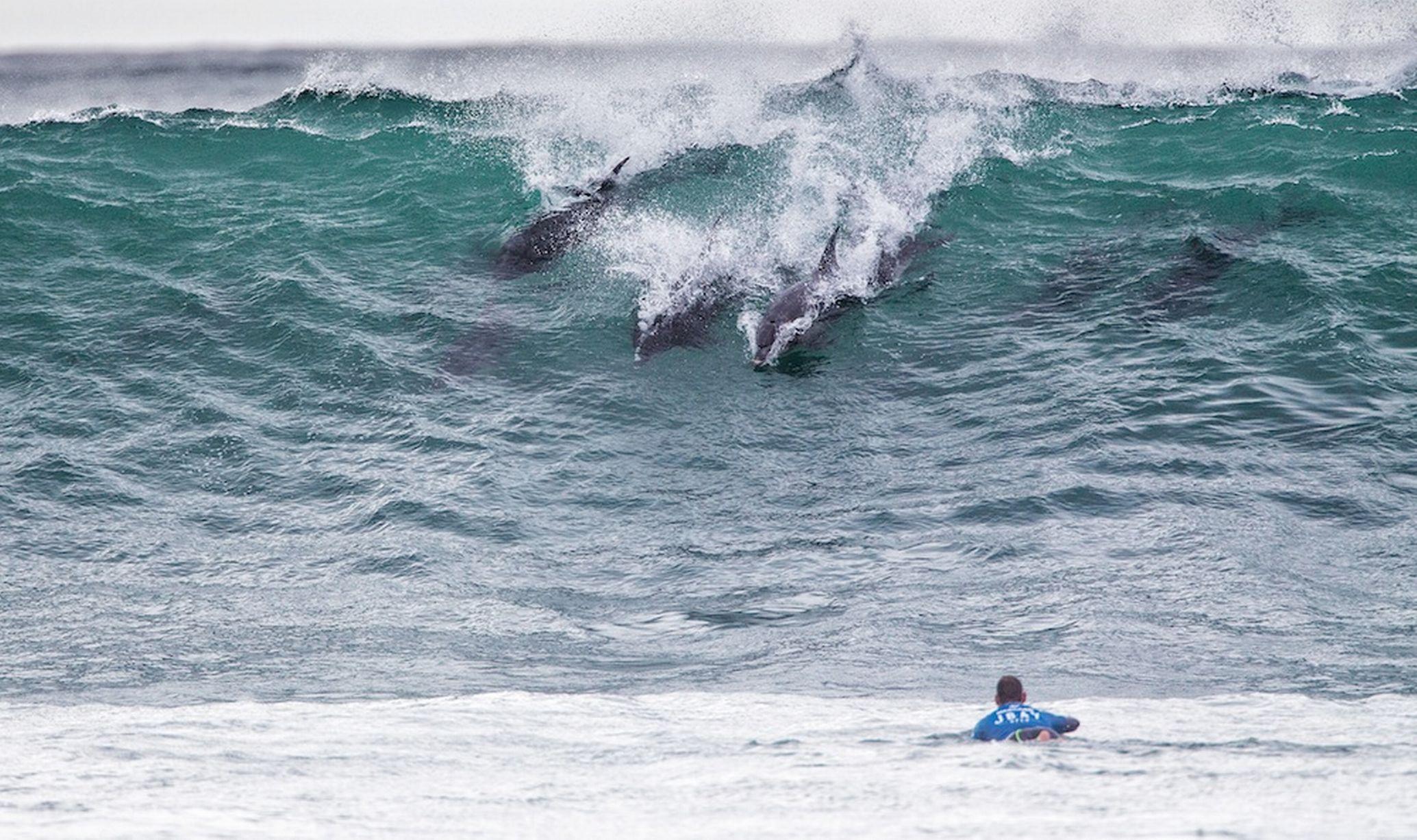 """十几只海豚闯冲浪比赛 """"秒杀""""世界顶级选手"""