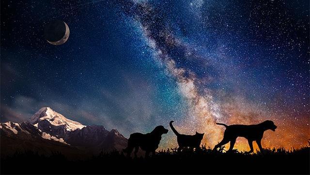 太空纪念公司Celestis Pets:把死去的心爱宠物送到太空