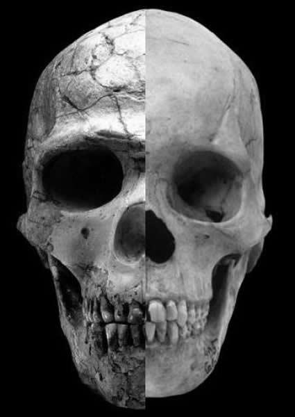 从5万年前开始男人长相越来越娘