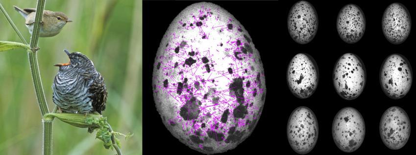 """新研究表明""""鸟蛋战争""""并不是像科学家所设想的那般进行的"""