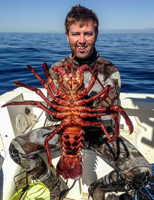 美国加州26岁男子福瑞斯特·加兰特与龙虾拍照