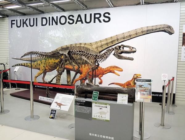 日本福井县举办恐龙化石展以宣传旅游业