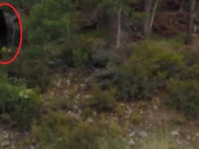 美国加州网民拍摄到一只疑似大脚怪的身影
