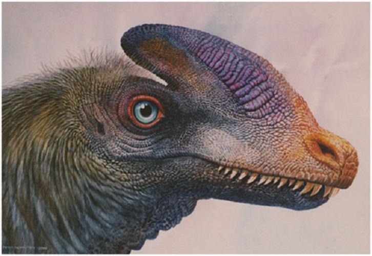 哪些恐龙物种是毛绒绒的