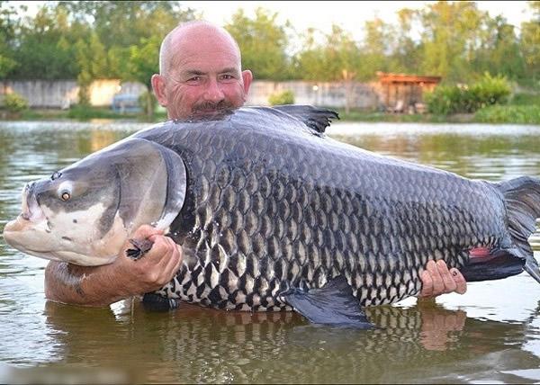 英国男子在泰国仅以一片面包便钓到一条重达150磅的暹罗鲤鱼