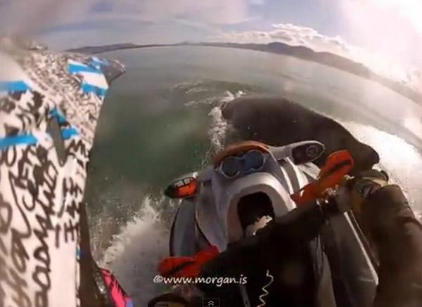 冰岛玩水上摩托意外撞到浮出水面的座头鲸