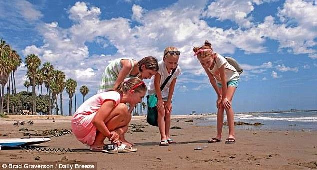 美国西海岸海滩大量神秘生物来袭