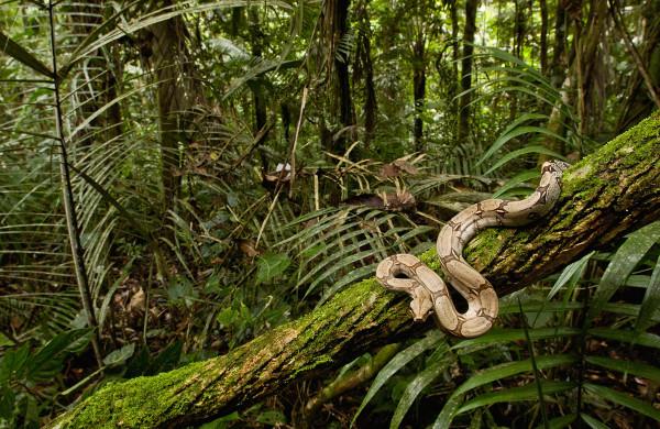 """研究发现蛇在爬树时心里想的是""""安全第一"""""""