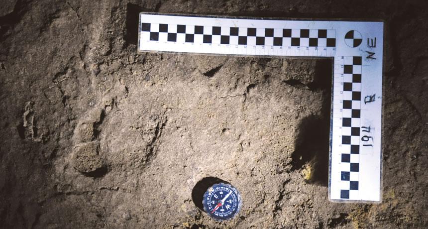 罗马尼亚洞穴中发现的人类脚印化石可能比