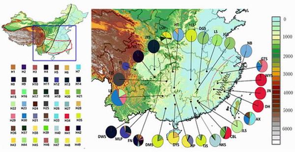 栲树分子谱系地理分化