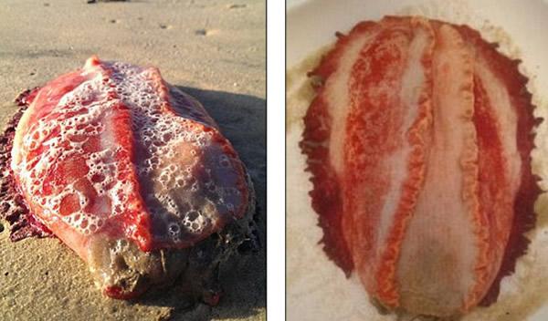 澳大利亚玛德金巴海滩惊现神秘红色水生生物
