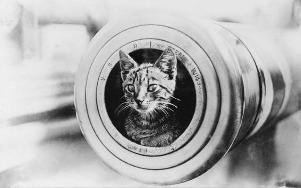 「HMAS遭遇号」(HMAS Encounter)上的军猫
