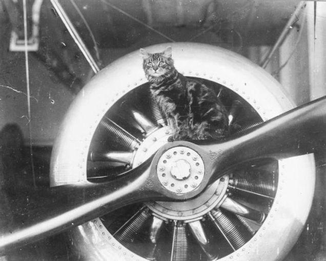 Pincher是HMS Vindex号上的「吉祥物」,坐在舰上飞机的螺旋桨上。