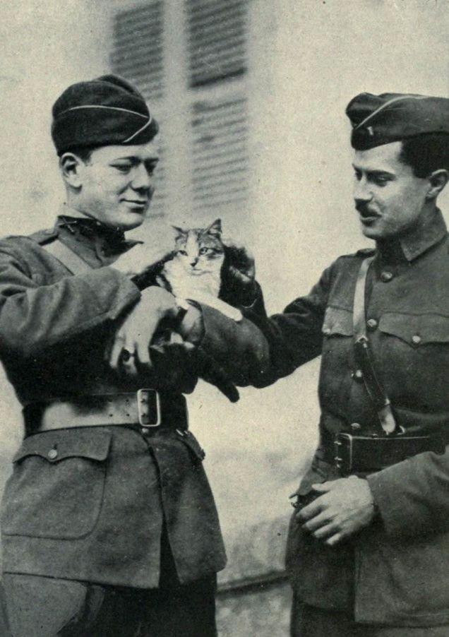 美国第二军(the U.S. 2nd Army Corps)军官和他们在Le Cateau-Cambrésis废墟里找到的猫。