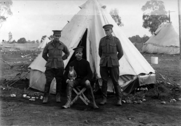 1915年8月12日,澳洲官兵与猫。