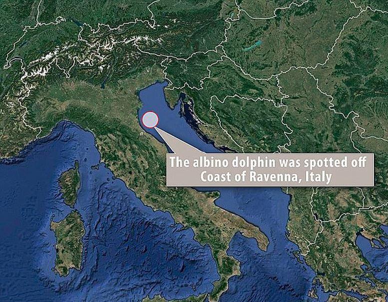 地中海海岸发现罕见珍稀白化海豚