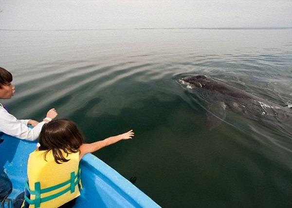 不少动物爱好者都希望能近距离观赏鲸鱼和海豚